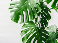 plantas artificiales para decorar