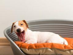 camas-para-perros-que-no-se-pueden-romper