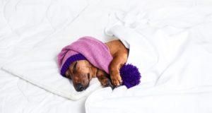 las-mejores-camas-originales-para-perros
